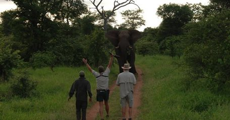Non-Trophy Elephant Package, 2018