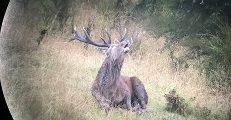 Red Stag / Bull Tahr Combo
