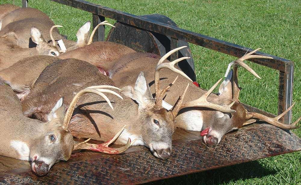 Best Times To Deer Hunt 2020 Whitetail Deer Hunt 2020 / United States   BookYourHunt.com
