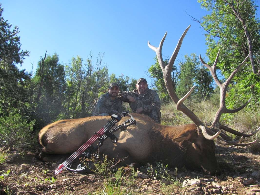 All Inclusive Cow Elk -No Draw Rifle 2x1
