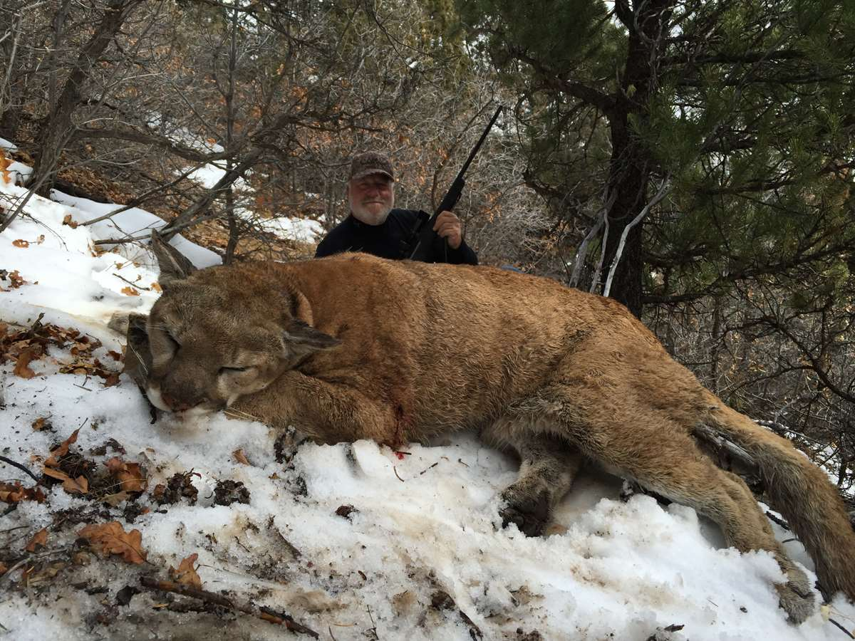 What Food Do Mountain Lions Eat