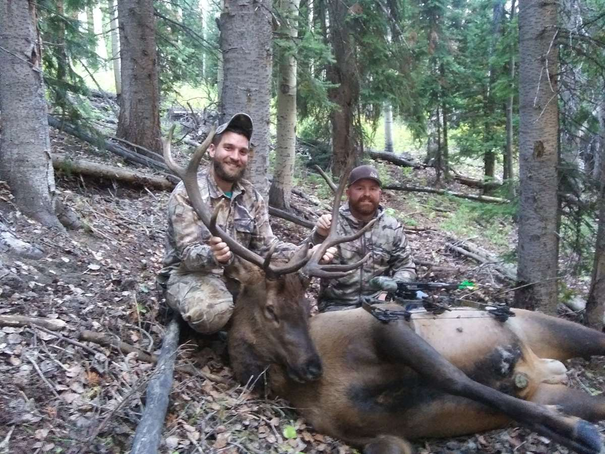 Colorado Guided Archery Elk Hunt 1