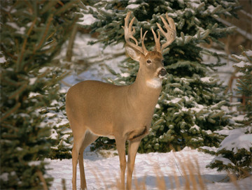 Hunting trips: White-tailed deer