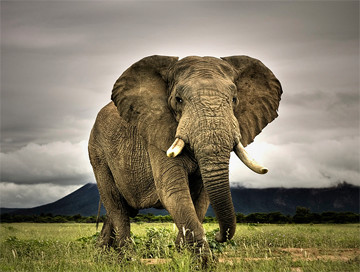 Hunting trips: Elephant
