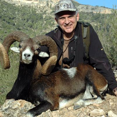 European Mouflon Sheep