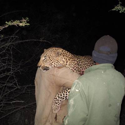 16-Day Leopard Hunt Free Range 2020