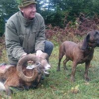 Mouflon hunt 1x1 in Austria