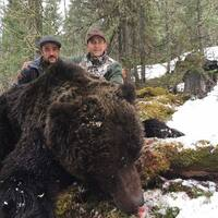 Siberian brown bear bait hunt