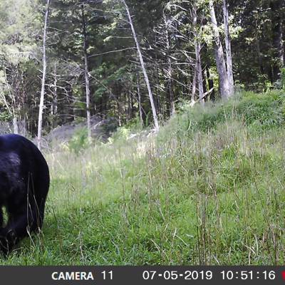 5 Day/4 Night Archery Bear Hunt