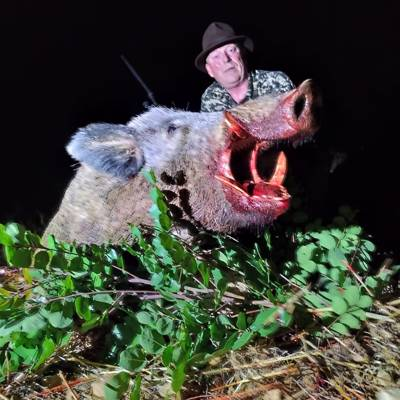 Wild Boar Stalking Hunt