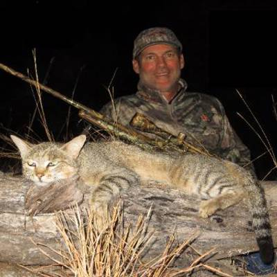 Hunt African Wild Cat in South Africa