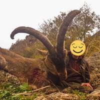 3 Ibex Females package