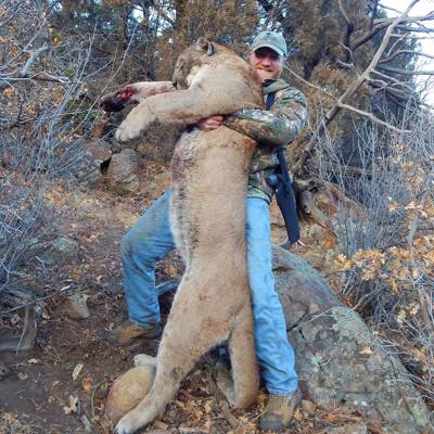 Last Spots! Dry Ground Mountain Lion