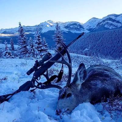 ONE ON ONE Mountain Mule Deer