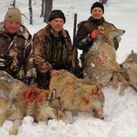 Wolf driven hunt