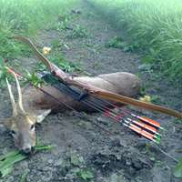 Red Stag, Mouflon and Roe buck Bow Hunt