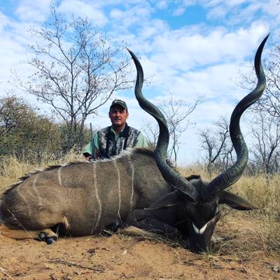 Big Kudu in the Rut - Limpopo