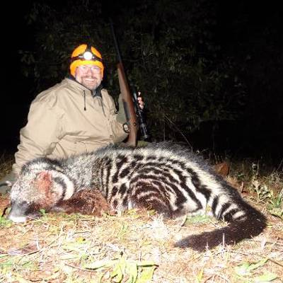 Hunt African Civet Cat in South Africa