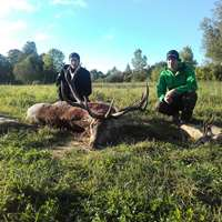 Red Stag Hunt in Latvia