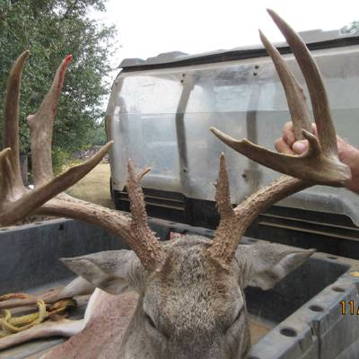 2 Whitetail Doe/Spike Hunt