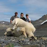 Mountain Goat Hunt in BC 1x1, Aug 1-8