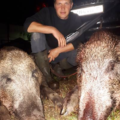 European wild boar hunt