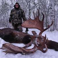 Cancellation hunt! Kamchatka moose!