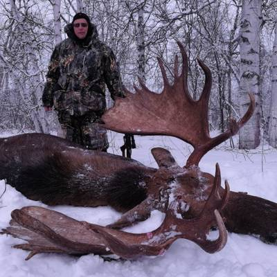 Kamchatka moose December 2020