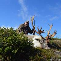 Fly-in Moose / Caribou Combo Hunt 2x1