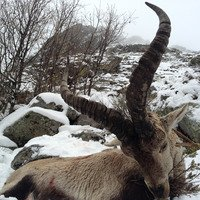 Gredos Ibex Hunt Season 19-20