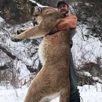 Special: Mountain Lion & Bobcat Combo