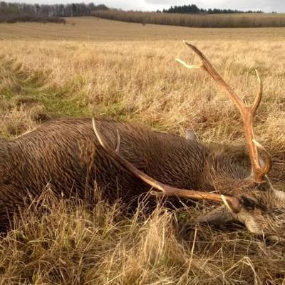 Red Deer Hunting in Olsztyn