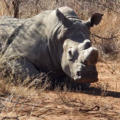 Rhino Bull Hunting Package