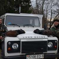 Capercaillie hunting in Belarus