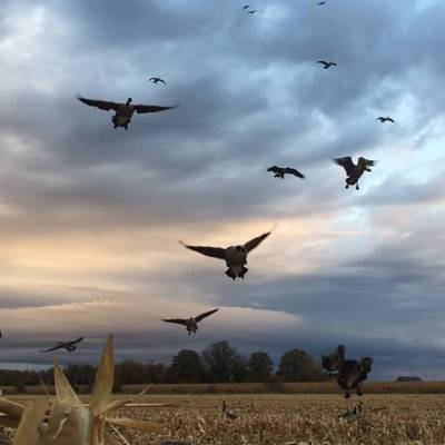 Signature Waterfowl Hunt