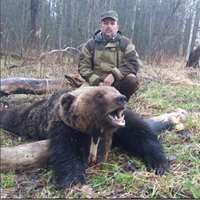 European bear spring hunt