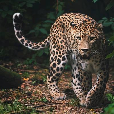 14 Day Leopard & Plains Game Safari