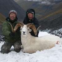 Dall's Sheep/ Grizzly/ Caribou/ B.Bear