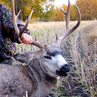 Whitetail Archery Hunt for 2 hunters '20