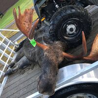 Maine 6 Day Moose Hunt Guaranteed Permit