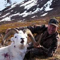 Dall Sheep 1x1 hunt