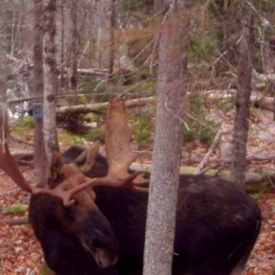 Lottery Draw Moose Hunt 2021
