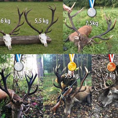 Red Deer (up to 5 kg) in Bialystok '20