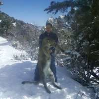 Cougar Hunts with Dogs 1x1