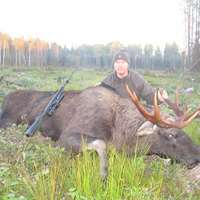 European moose hunt in the rut