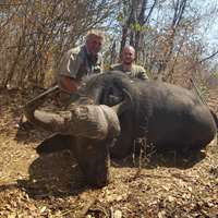 7 days Cape Buffalo Hunt - 2019