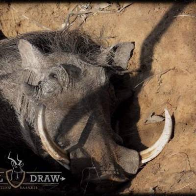 5 day Bushveld Hunt 1x1