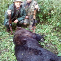 European bear hunt