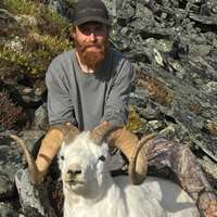 Dall Sheep Hunt
