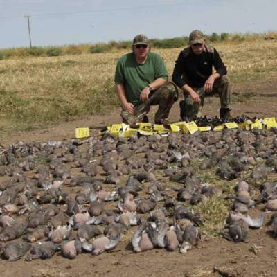 High volume DOVE shooting in La Pampa